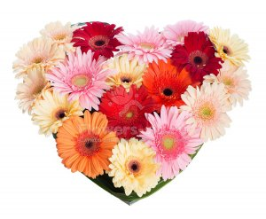 Heart of gerberas